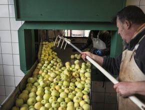Jusqu'à 4 tonnes de pommes par jour peuvent être transformées.