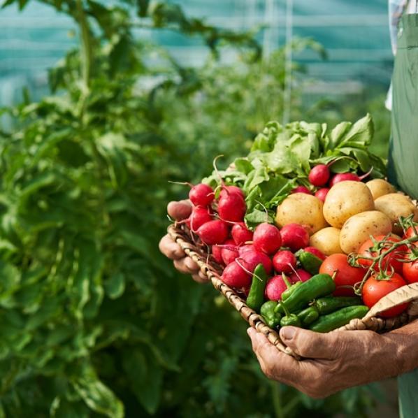 Panier de légumes frais tenus dans les bras