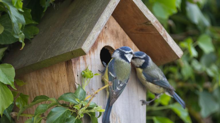 Préserver la biodiversité en installant des nichoirs à oiseaux